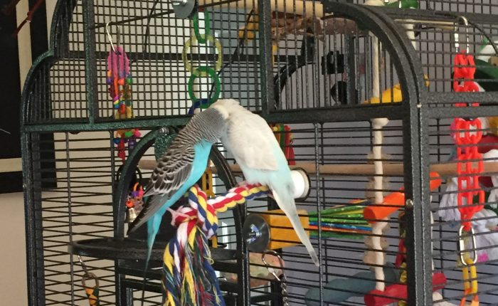 Gift ideas for the parakeet and parakeet parent