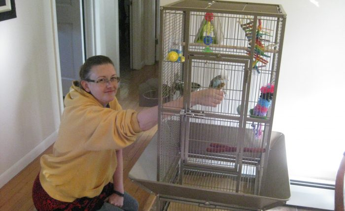Preparing for parakeet – cage setup
