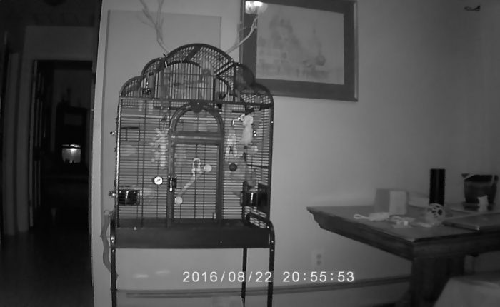 Parakeet perch dominance – night fights