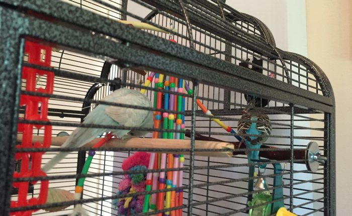 Review of Super Bird Creations Wind Chimes toy for birds