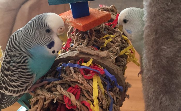 Cooking safely with parakeets in the home