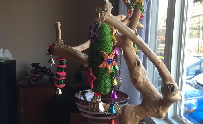 Christmas parakeet gift list