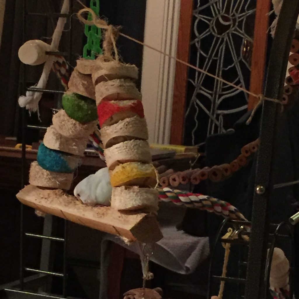 Wesco Bird Kabob Carnival Swing Bird Toy