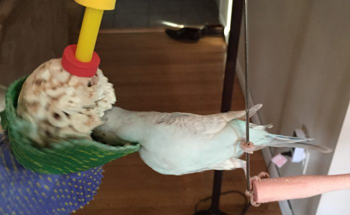 Review of the Bonka Bird Toys 1925 Cake Bird Toy