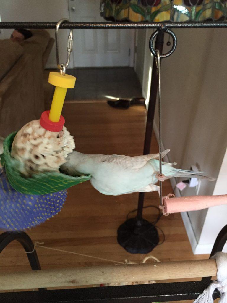 Bonka Bird Toys 1925 Cake Bird Toy