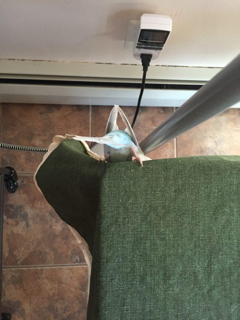 parakeet cage escape