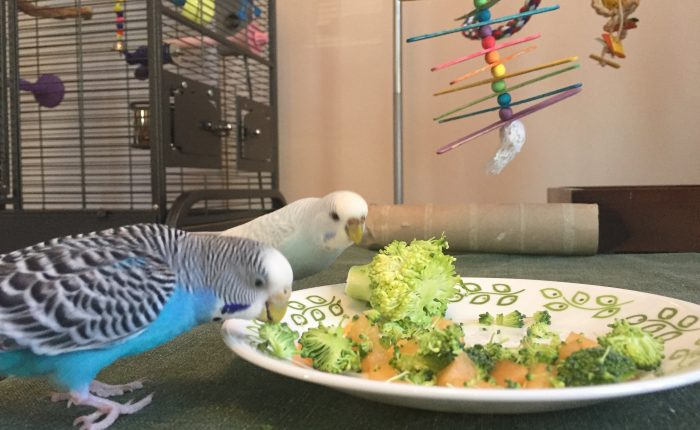 Sense of smell and taste in parakeets