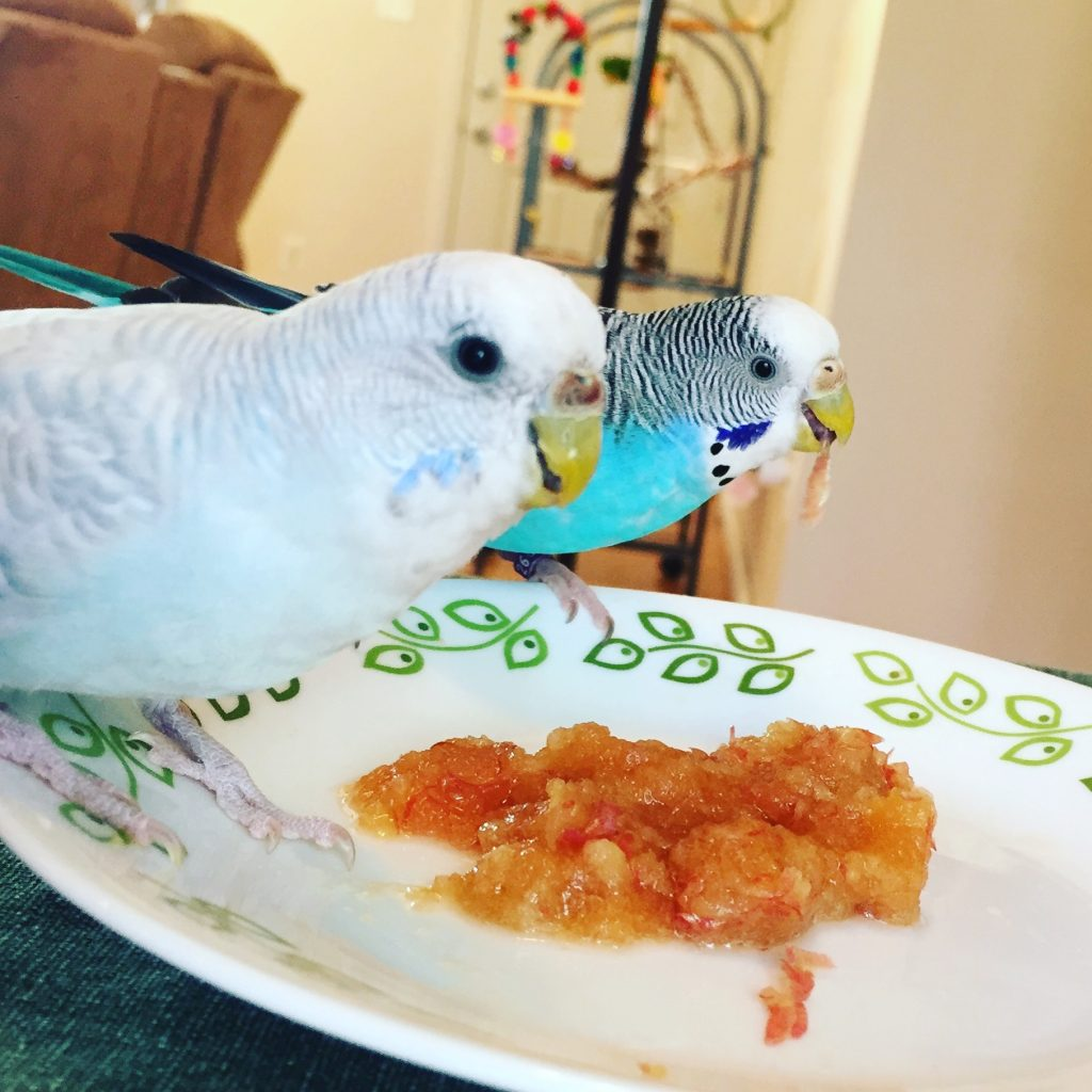 Parakeets eat apple