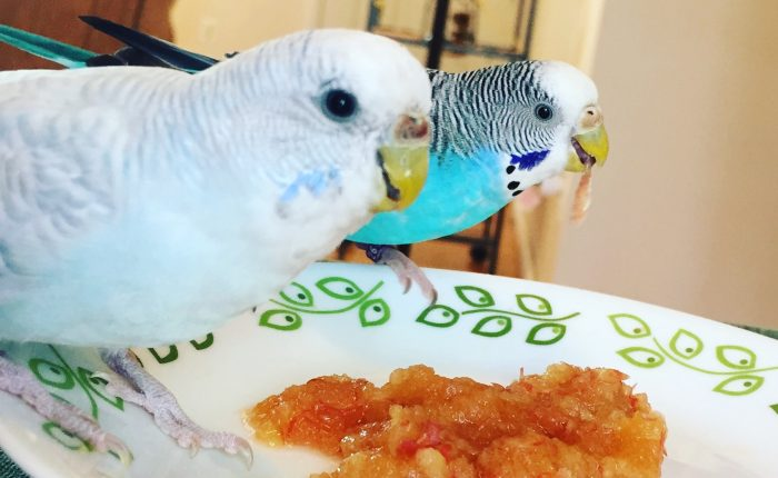 The Parakeet's sense of touch