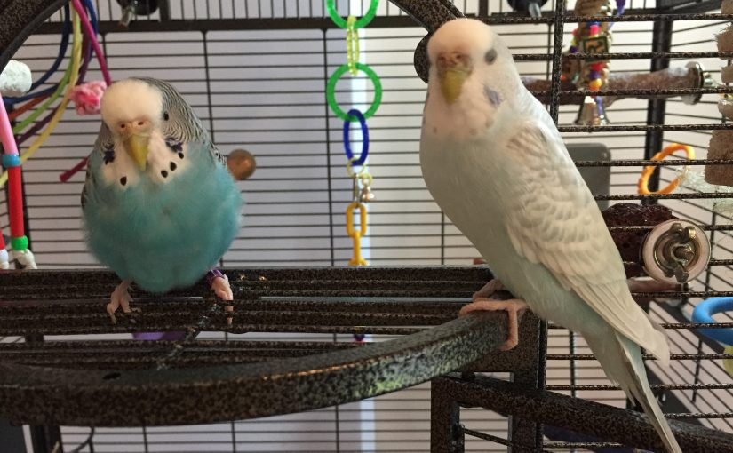 happy about my parakeets