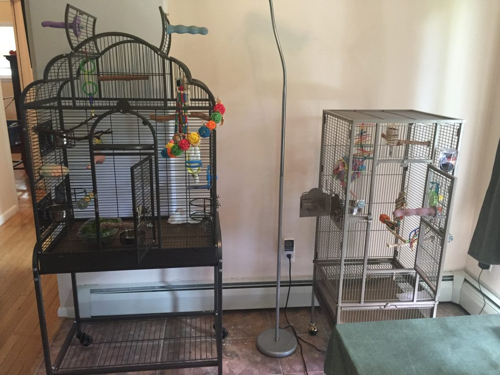 The parakeets break up and separate households - homekeethome