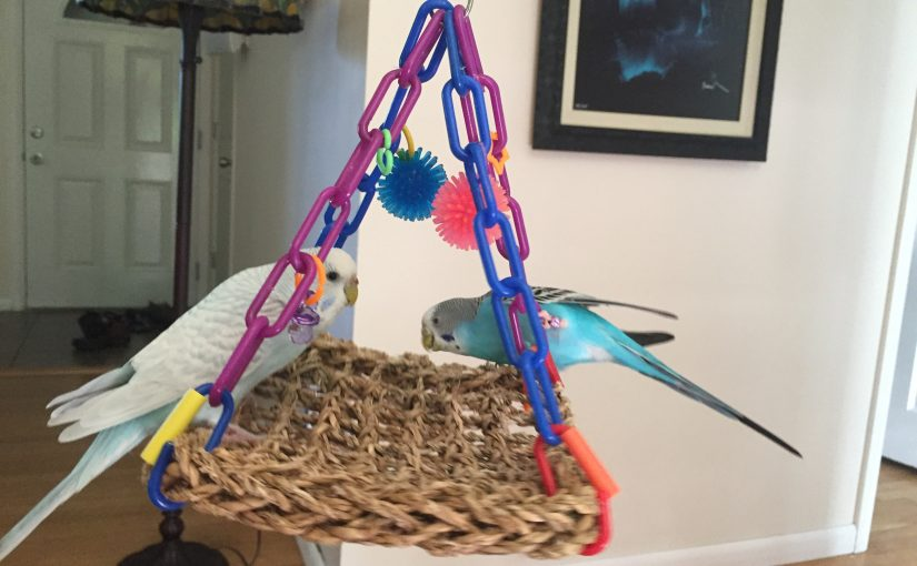 Best toys for parakeets/budgies