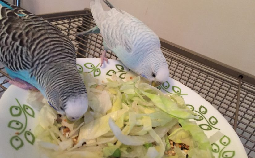 mom guilt - parakeet edition