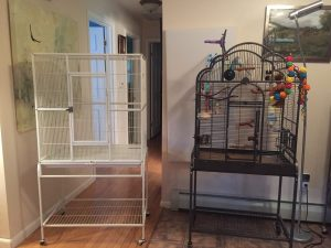 Prevue chalk white flight cage