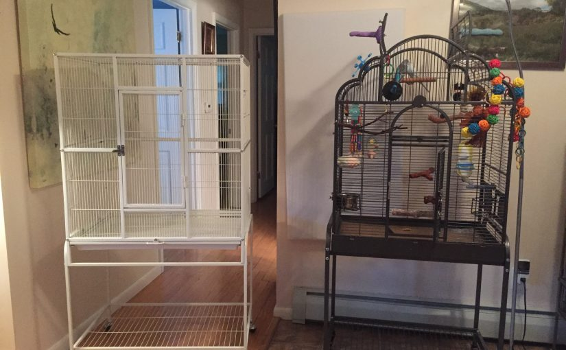 Toby's new cage – our first traditional flight cage