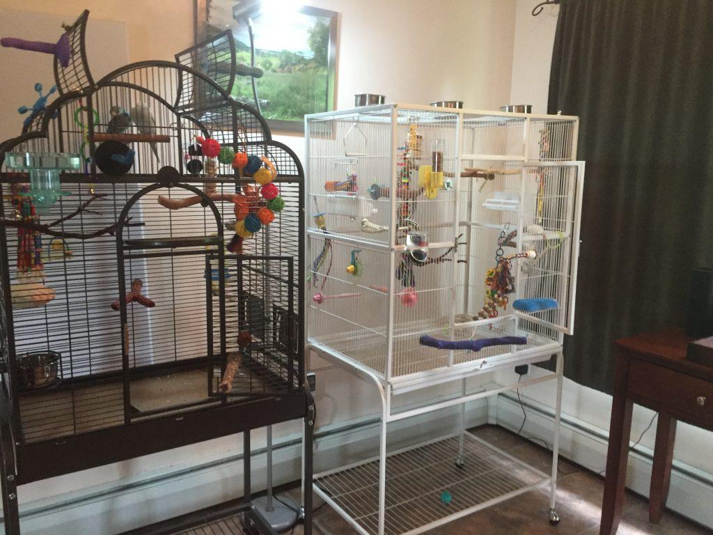 prevue chalk white flight cage