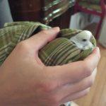 parakeet pedicure or parakeet torture!