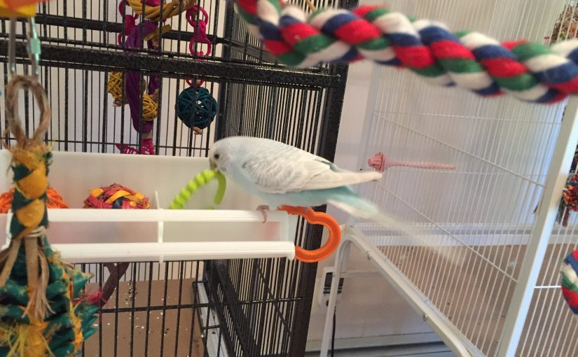 Using a food trough as a parakeet toy box