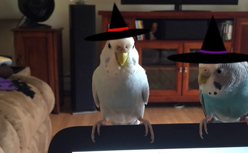 Halloween safety for budgies