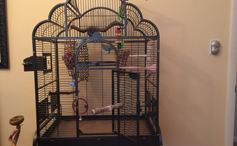 Getting ready for quarantine – new parakeet coming soon!