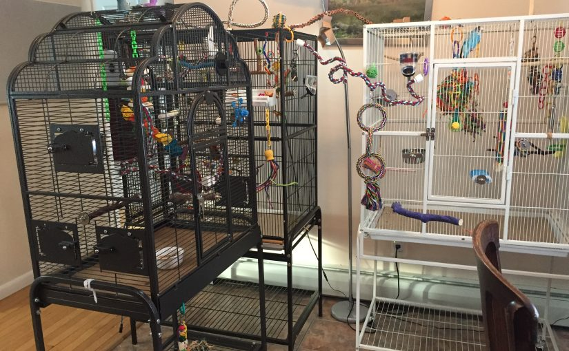 A brief review of every budgie cage we own