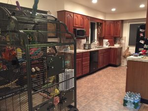 how close our cages are to the kitchen