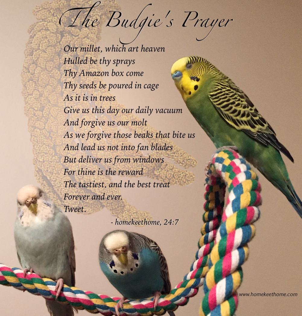 The Budgie's Prayer