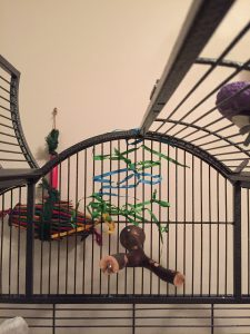 woven paper strands to redirect cage bar biting budgie