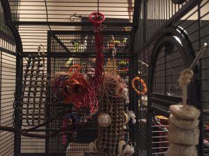 using big toys to distract cage bar biting budgie