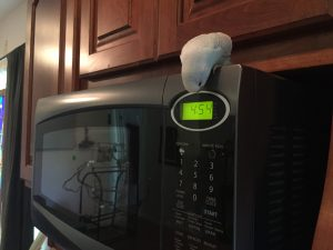 Kelly's recent fascination with the microwave