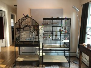 Our cage set up